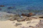 Cala dell'Arenella Isola del Giglio