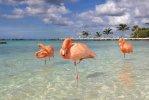 Isola Sonesta di Aruba.jpg