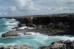 Grotta dei Fiori Animati di Barbados