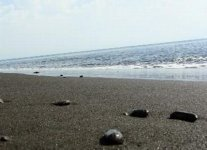 Spiaggia Punta dell Asino.jpg