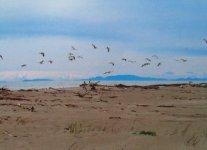 Spiaggia dei Gabbiani.jpg