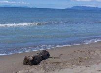 Spiaggia delle Capanne di Principina a Mare